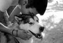 Ν' αγαπάς σαν σκύλος. H μόνη επικίνδυνη ράτσα είναι η ανθρώπινη