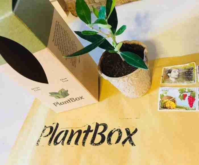 Ο γεωπόνος που ξεκίνησε από την Κορινθία και έφτιαξε την «Ελιά στο κουτί» που ταξιδεύει παντού