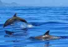 Το πρώτο καταφύγιο απελευθέρωσης δελφινιών του κόσμου βρίσκεται στην Ελλάδα
